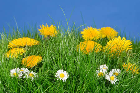 Lush meadow of wild flowers with cloudless blue summer sky Stock Photo - 4655557