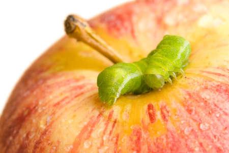 grub: Green grub on an apple