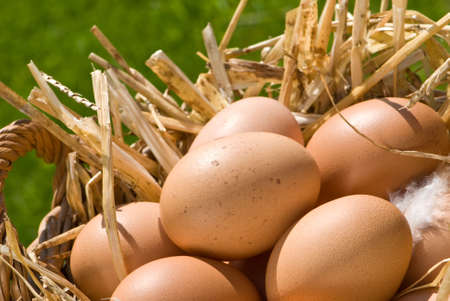 egg shell: Basket of freshly laid free range eggs in outdoor setting Stock Photo