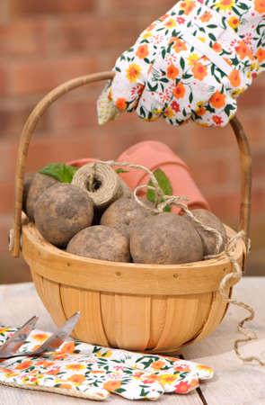 unwashed: Trug di patate saxon appena scavato nel giardino sul tavolo rustico