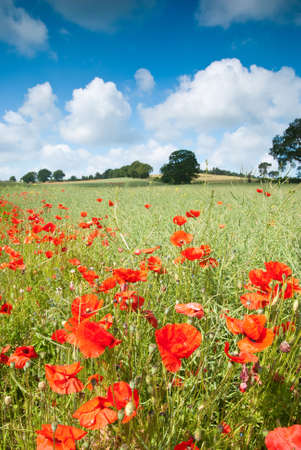 Landscape of wild poppy flowers in rural Worcestershire, UK Stock Photo - 5060799