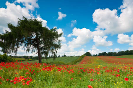 Poppy field landscape in Worcestershire, UK in summer with blue sky and fluffy clouds Stock Photo - 5060831