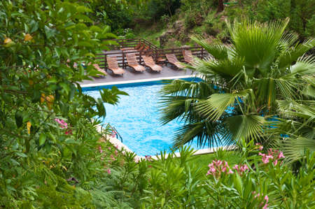 Luxury tropical swimming pool surrounded by lush plants Stock Photo - 5060837