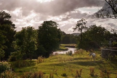 pastoral: Backlit pastoral scenic in rural Shropshire with pony