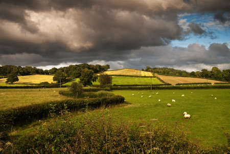 Patchwork fields with crops and sheep with storm just clearing from sky photo