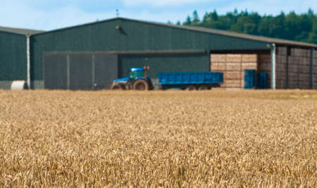 Wheat field with farm buildings in background with heat haze photo