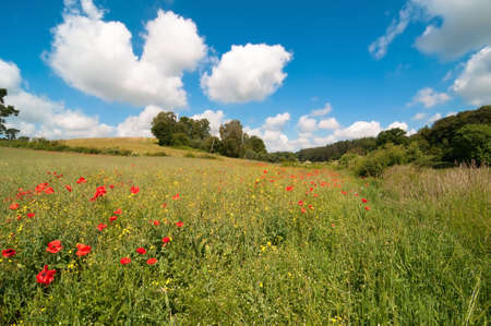 Delightful poppy field in summer with fluffy clouds in blue sky Stock Photo - 5351575