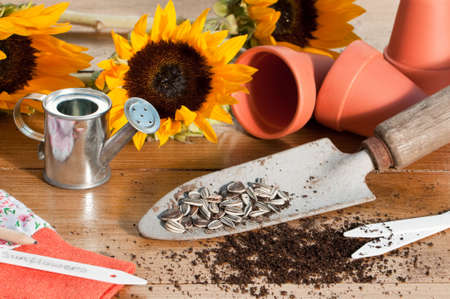 In the potting shed with sunflower seeds and plants with watering can and tools photo
