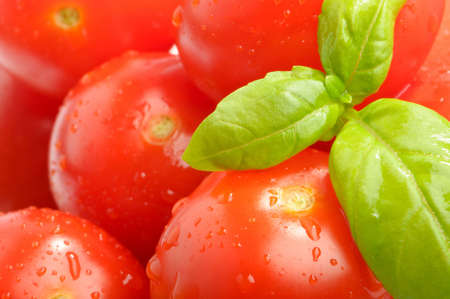 Close up of ripe vine tomatoes with basil photo