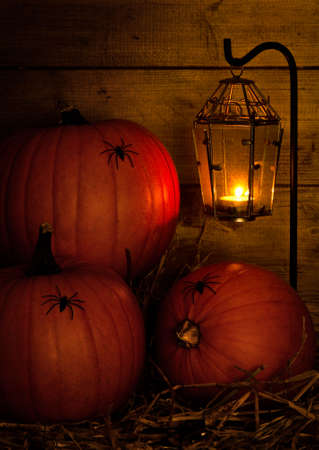 Halloween pumpkins in the barn lit by candle light from lantern and crawling with spiders photo