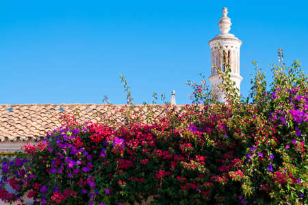 traditional climbing: Colourful flowers on top of typical Algarvian cottage roof