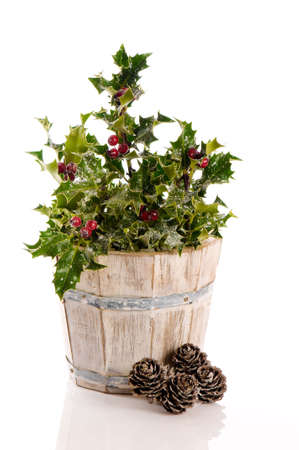 Winter holly and berries covered with snow in rustic bucket with pine cone decoration photo