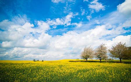 Summer landscape of Canola rapeseed field in Shropshire, UK photo