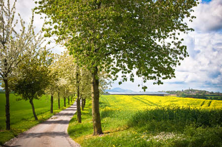 Spring walkway with tree lined lane through country fields photo