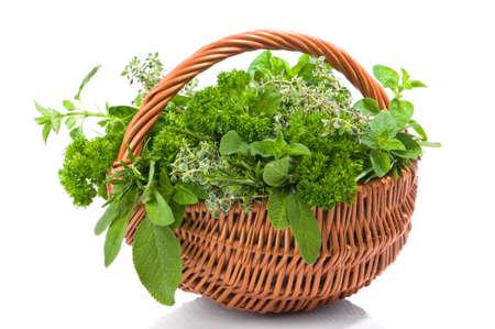 tomillo: Cesta de hierbas reci�n escogidas incluyendo perejil, Romero, or�gano, tomillo y salvia