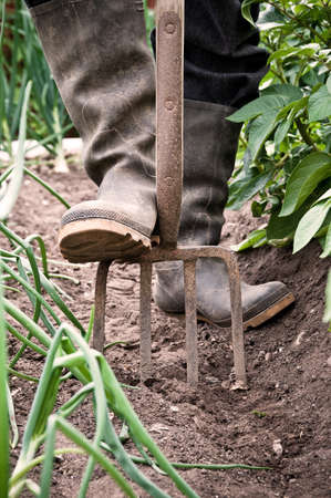 mans: Mans feet in dirty wellington boots digging the garden with fork Stock Photo