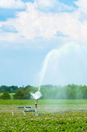 Water irrigation of potato crops in Shropshire with beautiful summer sky photo