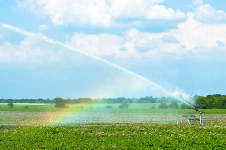 Irrigating potato crops landscape with rainbow caused from the mist photo