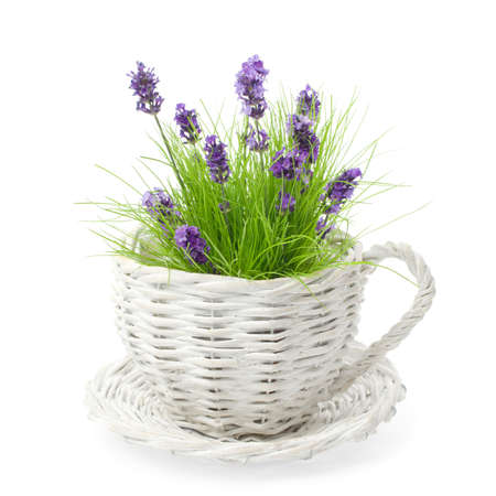 sprigs: Wicker cup  and saucer planted with lavender amongst grass