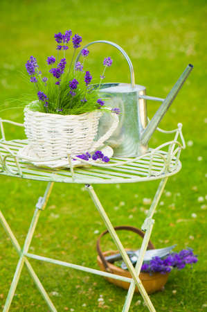 Summer lavender in the garden with watering can and basket of lavender on the grass photo