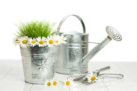 galvanised: Daisies in a metal flower bucket with watering and garden tools