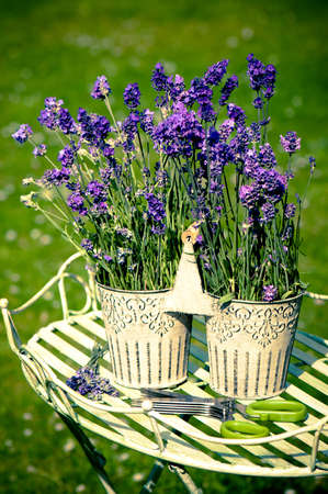Lavender flowers in pretty metal container in outdoor setting photo
