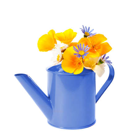 Watering can filled with flowers on white background