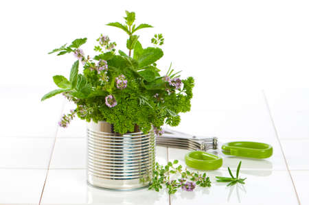 Fresh garden herbs in recycled tin can with herb scissors on tiled kitchen surface photo