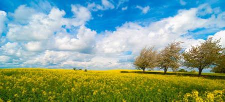 Canola field landscape panorama with beautiful summer sky