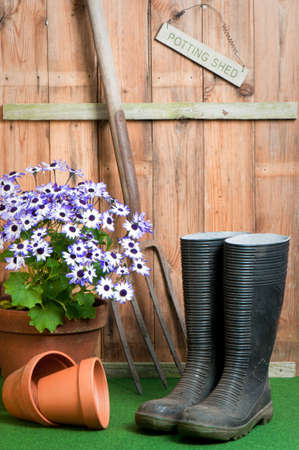 In the garden potting shed, garden concept with senetti potted plant, wellington boots and garden fork photo