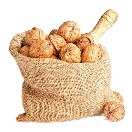 Burlap sack of walnuts in shells with wooden scoop over white background photo