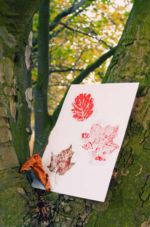 Autumn painted leaf prints in tree trunk  photo