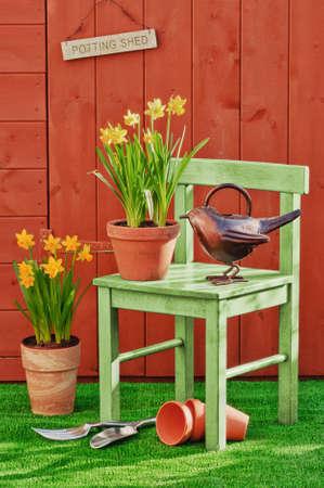 Spring planting of daffodils in dappled sunshine photo