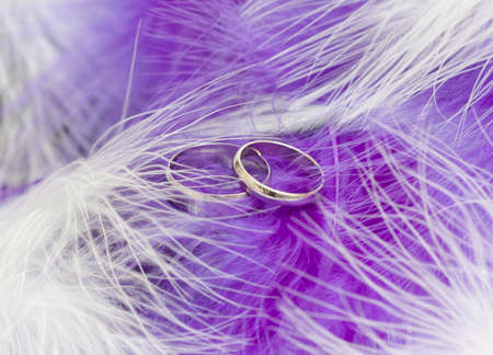 wedding bands: White gold wedding rings nestling in purple and white feathers