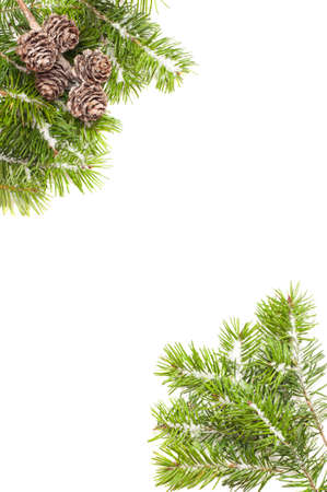 Pine branches and fir cone corners covered in snow on white background Stock Photo - 11099756