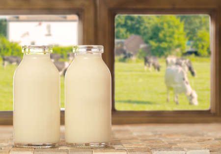 Two bottles of fresh milk with a field of cows outside the window photo