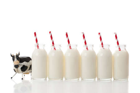 Row of retro glass milk bottles with red and white striped straws and inquisitve cow