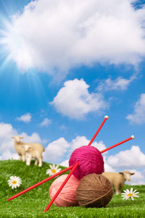 Balls of wool with knitting needles in meadow with sheep - knitting concept photo