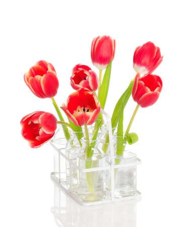 tulips in vase: Spring tulip stems in retro glass bottles on white background