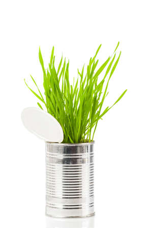 sprouting: Fresh organic wheatgrass in recycled tin can on white background Stock Photo