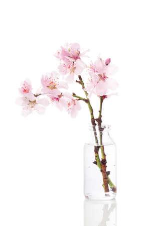 kersenboom: Mooie voorjaar kersenbloesem in uitstekende glazen fles op een witte achtergrond Stockfoto