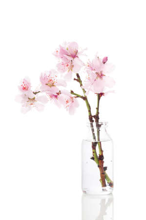 Pretty spring cherry blossom in vintage glass bottle on a white background