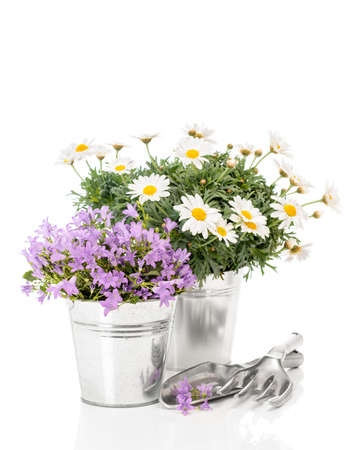 Daisies and Campanula flowers with garden tools on white background Stock Photo - 13087925