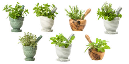 wild mint: Collection of garden herbs with various pestle and mortars on a white background
