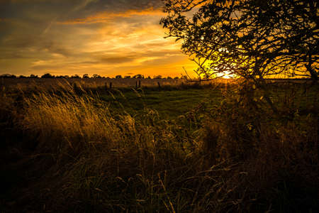 hedgerow: Evening over Lilleshall farmland in late summer in the County of Shropshire, England