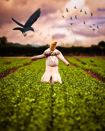 espantapajaros: Espantapájaros en campo de cultivos con cuervos
