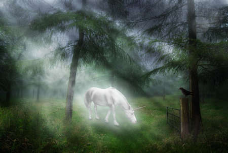 Unicorn in a magical forest setting with jackdaw watching Foto de archivo