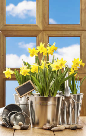 Spring window with pots of daffodils and garden fork photo