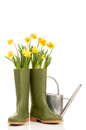 wellington: Wellington boots with spring daffodils and watering can on a white background