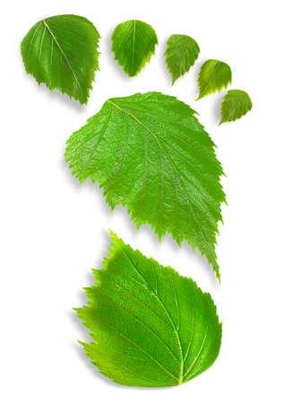 Impresión del pie hecha de hojas de primavera sobre un fondo blanco